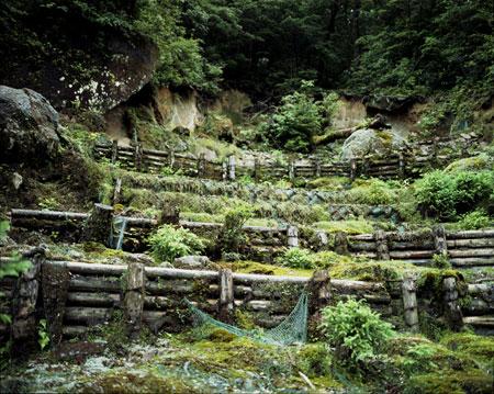 yakushima_hill_03