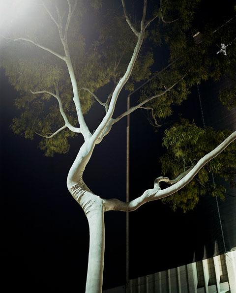 Friedman_night_02