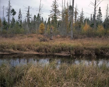 borealforest_vt