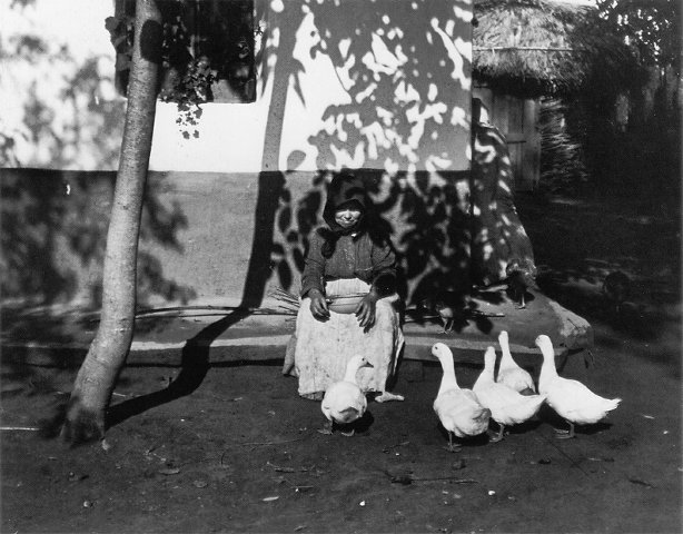 kertesz_feeding_the_ducks