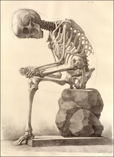 in fact  anatomy in art grew