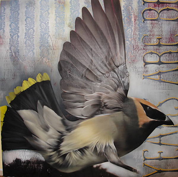 escapeintolife_galleryofbirds