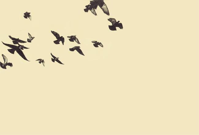 17_pigeons