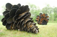 Shovel pinecones, Patrick Plourde