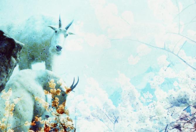 Moore_New York NY usa 2011_goats
