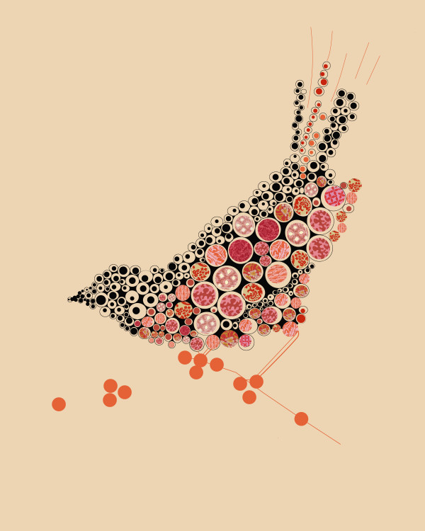 Marci Cheary, Bird on a Wire