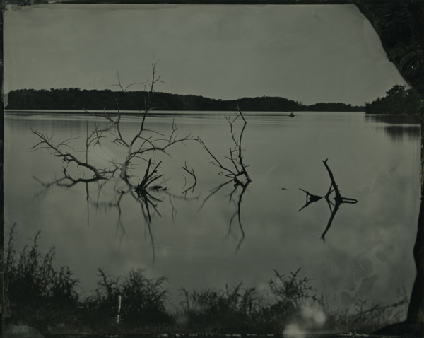 Rashod Taylor, Untitled (branches in lake) 2013