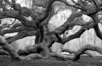 William Lemke, Angel Oak