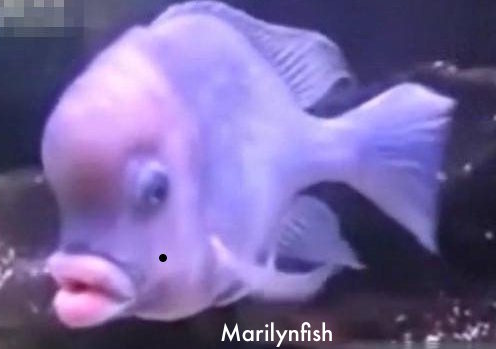 fishmarilyn